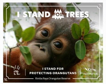 Stand For Trees 2